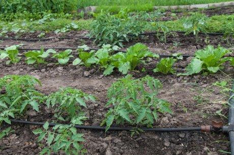 Tera patrick nud naked photo