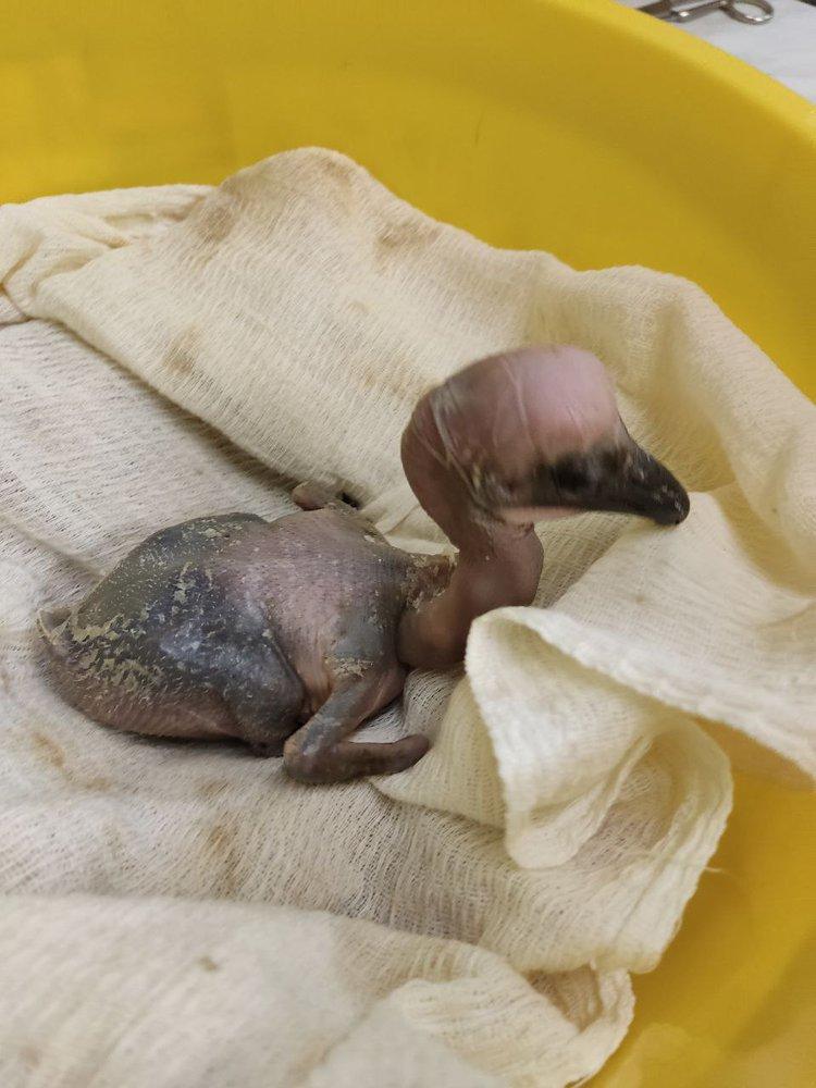 Theme from new york new york sheet music pdf