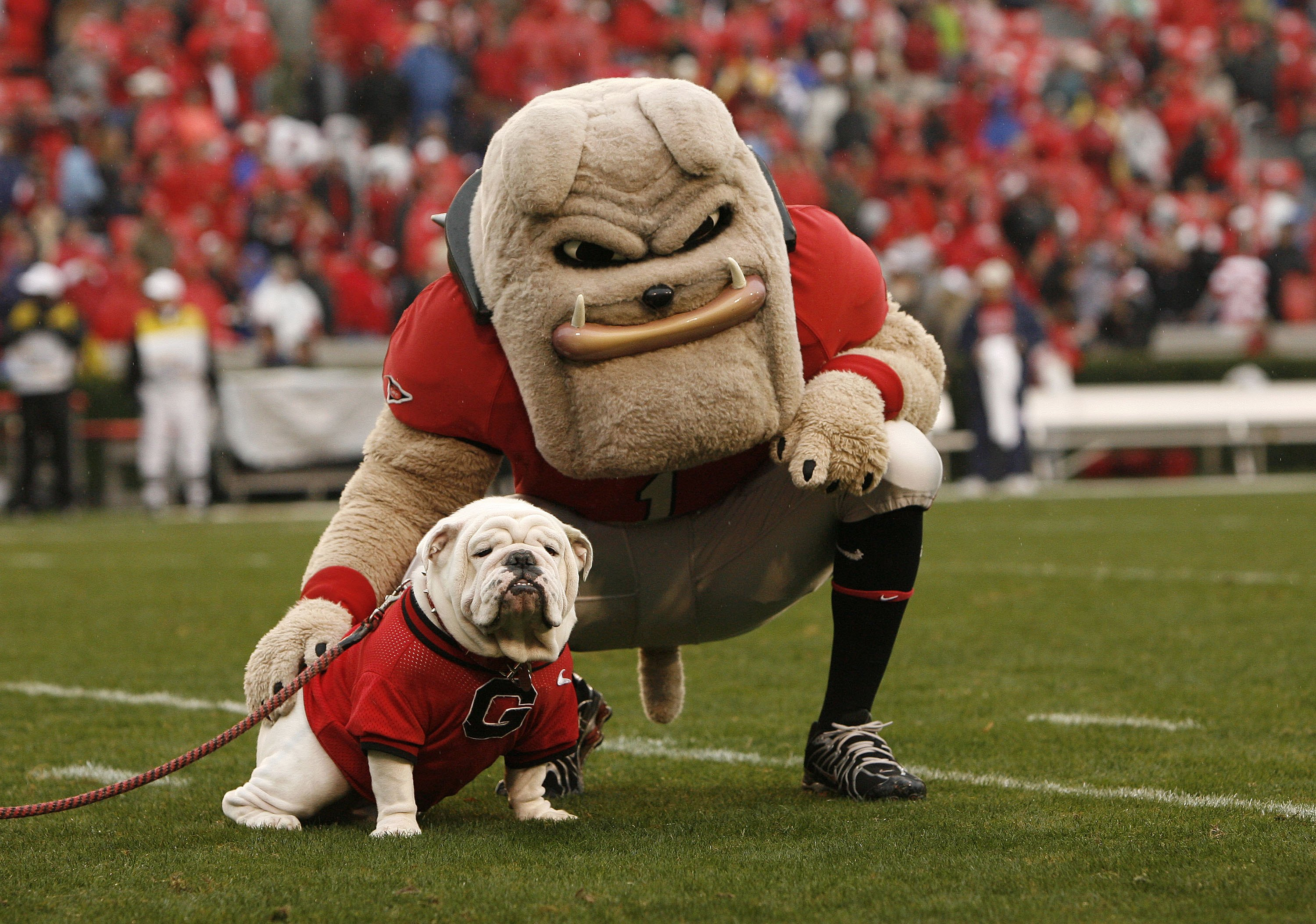 All college football mascots